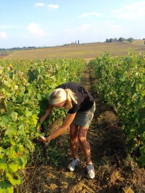 Oenoforos vinresa till Toscana, Cortona, vingården Tenimenti d'Alessandro.